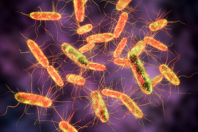 Public Health Agency of Canada says salmonella outbreak in 6 provinces, 63 sick